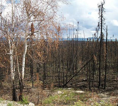 wildfire damage along Taylor Highway